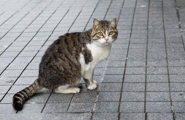 online dating κορίτσι αρέσει γάτες να βγαίνεις με τον καλύτερό σου φίλο μετά το διαζύγιο